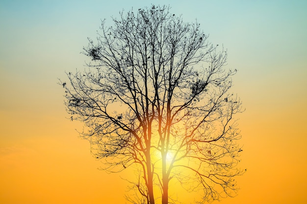 Belo nascer do sol com silhueta de árvore