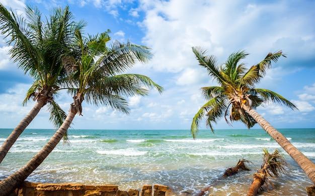 Belo nascer do sol de manhã cedo sobre coqueiro com o mar