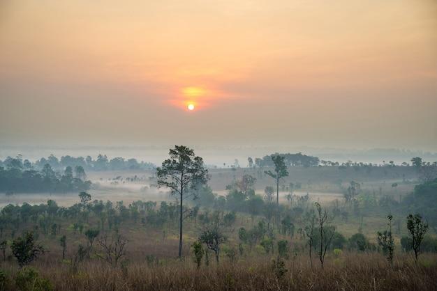 Belo nascer do sol e nuvens de nevoeiro na floresta do parque nacional thung salaeng luang, tailândia