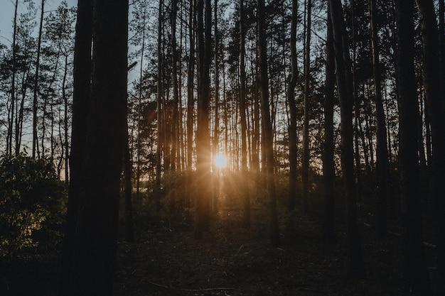 Belo nascer do sol na floresta de outono
