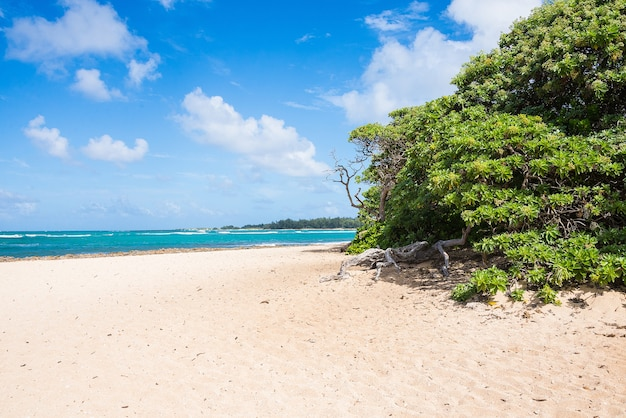 Belo oceano batendo na praia de areia na ilha de oahu, havaí