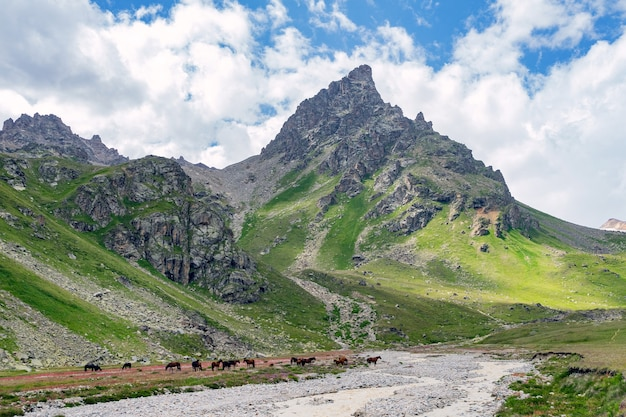 Belo panorama de altas montanhas rochosas com geleiras poderosas, picos nevados e prados verdes contra o céu azul e nuvens