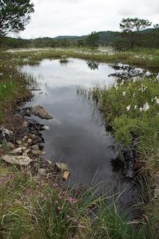 Belo pântano com grandes lagoas rodeadas por grama.