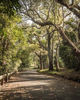Belo parque com grandes árvores e vegetação com uma estrada cheia de curvas e folhas caídas
