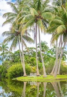 Belo parque com natureza tropical e palmeiras