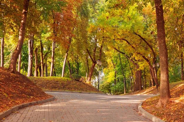 Belo parque de outono na luz solar
