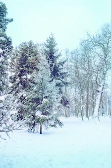 Belo parque no inverno