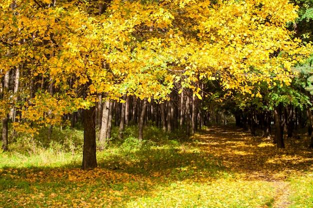 Belo parque outono com folhagem amarela e dourada ao sol