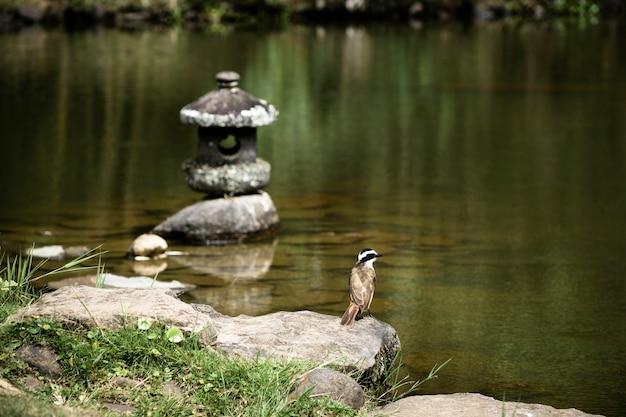 Belo pássaro à beira do lago