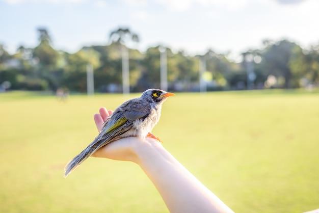 Belo pássaro em uma mão