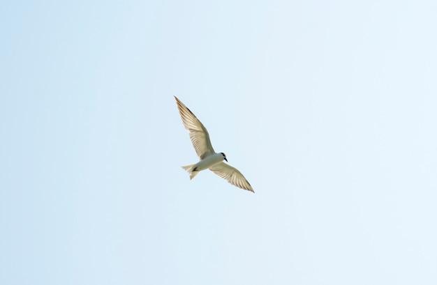 Belo pássaro no céu