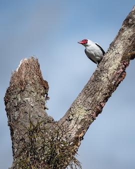 Belo pássaro pousado em uma árvore morta com o céu