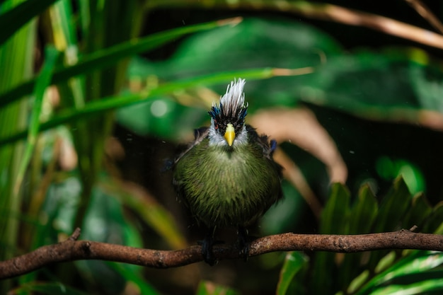 Belo pássaro tropical com uma cabeça branca no parque