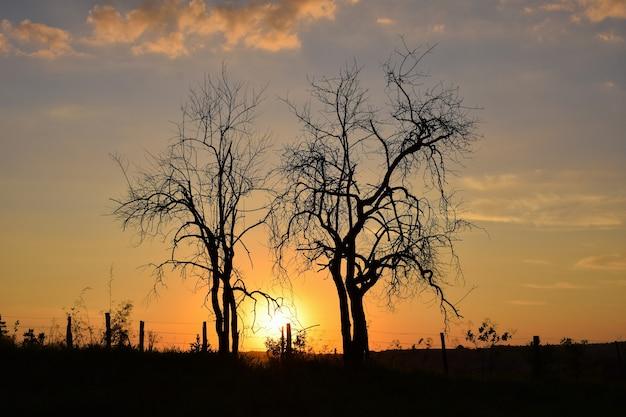Belo pôr do sol entre duas árvores secas no horizonte