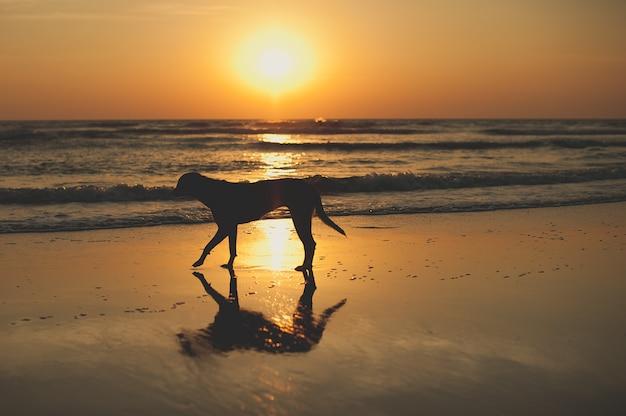 Belo pôr do sol no mar na ásia