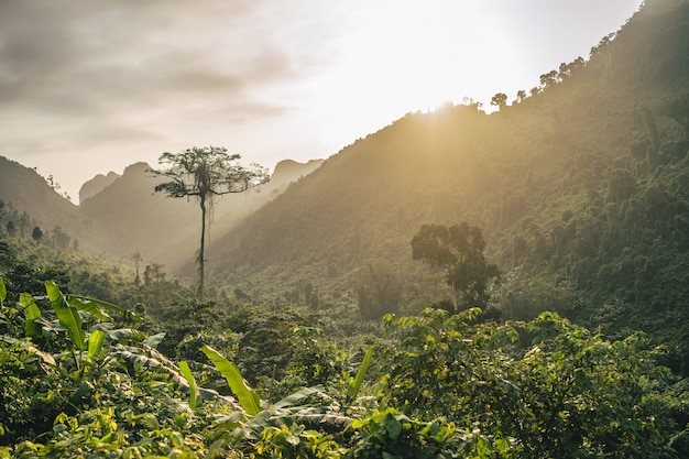 Belo pôr do sol sobre uma paisagem de floresta e montanha