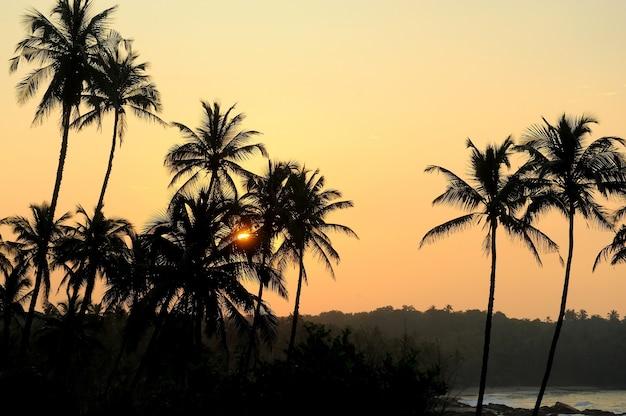 Belo pôr do sol tropical com palmeiras na praia