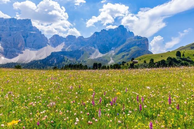 Belo prado alpino em primeiro plano e dolomitas italianas em segundo plano.
