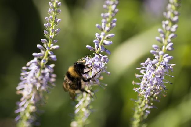 Belo prado com flores silvestres e abelhas
