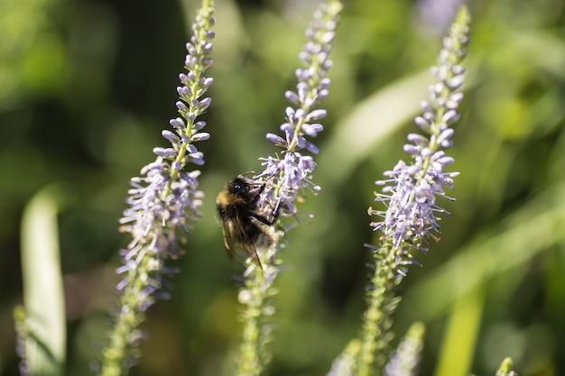 Belo prado com flores silvestres e abelhas.