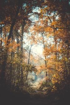 Belo ramo com folhas e estrada outono na floresta, filtro