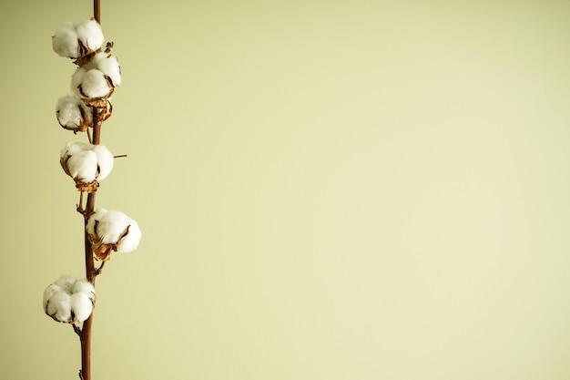 Belo ramo de algodão na parede verde com lugar para texto. postura plana.