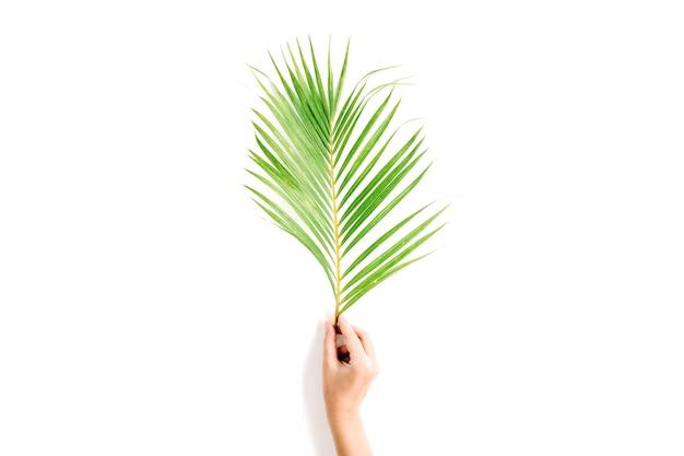 Belo ramo de palmeira na mão de uma menina isolado no branco
