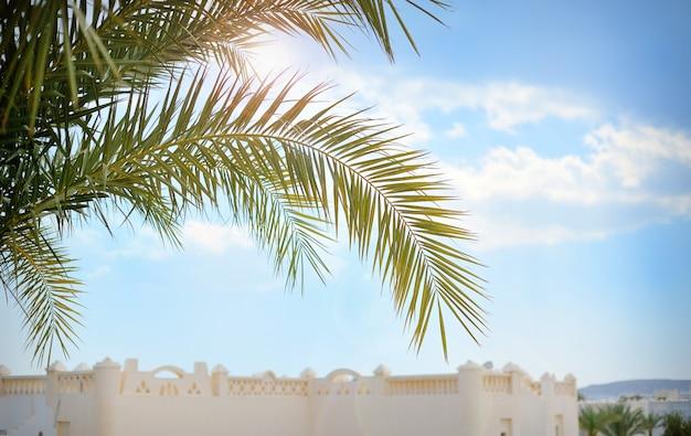 Belo ramo de palmeira no céu azul. Foto Premium