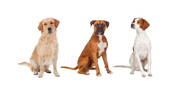 Belo retrato completo de três cães