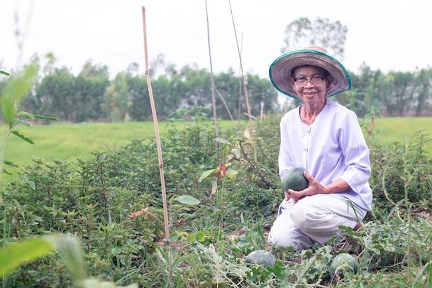Belo retrato de mulher idosa asiática de sorriso agricultor com segurando melancia