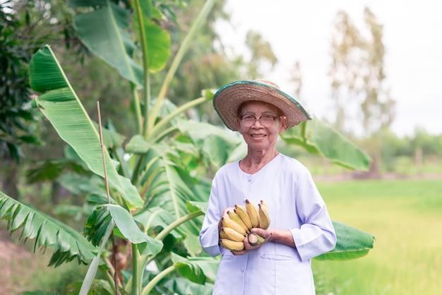 Belo retrato de mulher idosa asiática de sorriso agricultor com segurando um brunch de bananas maduras
