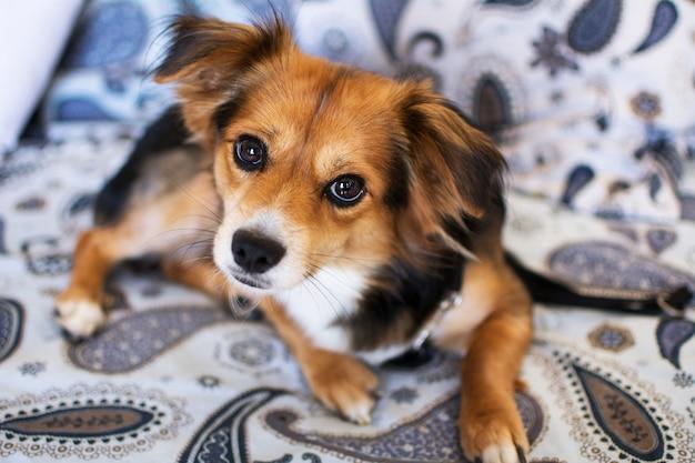 Belo retrato de um cachorro sentado no sofá