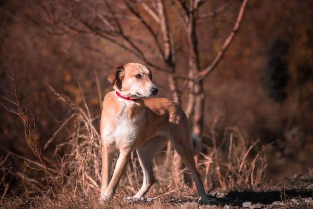 Belo retrato de um cão simples na natureza
