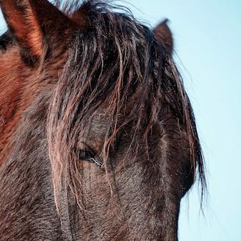 Belo retrato do cavalo preto na natureza