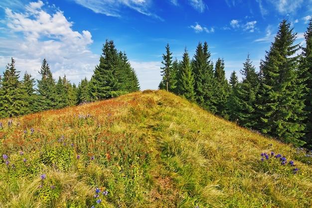 Belo vale na floresta nas montanhas dos cárpatos.