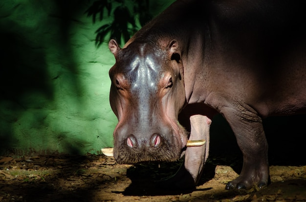 Belos animais fotografados em um zoológico no brasil com luz natural.