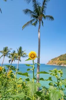 Belos campos com girassóis no verão com beira-mar belo mar turquesa superfície da água e coqueiros na paisagem de verão em phuket, tailândia.