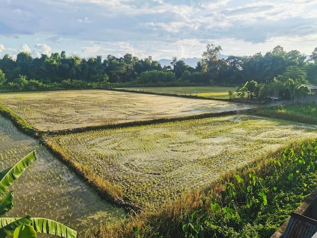 Belos campos de arroz contra céu nublado