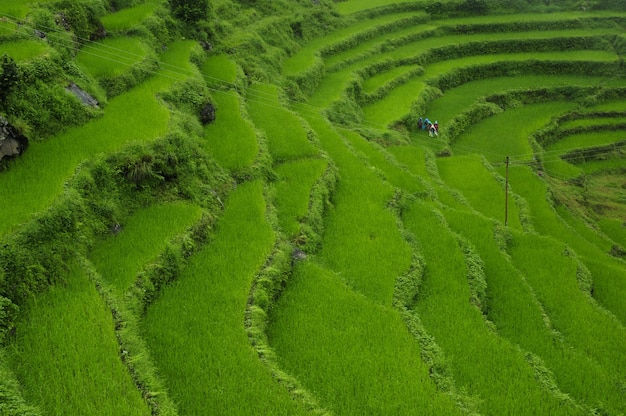 Belos campos verdes de arroz em socalcos localizados no himalaia, no nepal, durante o dia