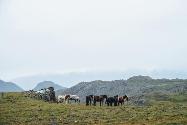 Belos cavalos pastam nas terras altas. paisagem alpina cênica com rebanho de cavalos na colina verde entre as rochas. montanhas cobertas de neve em nuvens baixas. cenário atmosférico com manada de cavalos em tempo nublado