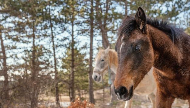 Belos cavalos selvagens na floresta
