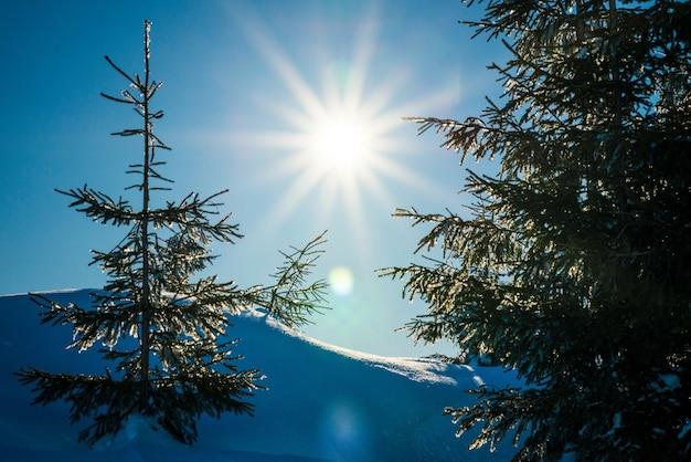 Belos pinheiros delgados crescem entre nevascas cobertas de neve em uma encosta contra um fundo de céu azul e lua brilhante em uma noite gelada de inverno. conceito de descansar fora da cidade no inverno