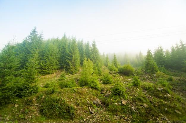 Belos pinheiros nas montanhas