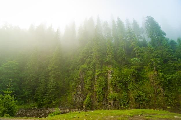 Belos pinheiros verdes e rio nas montanhas dos cárpatos na ucrânia