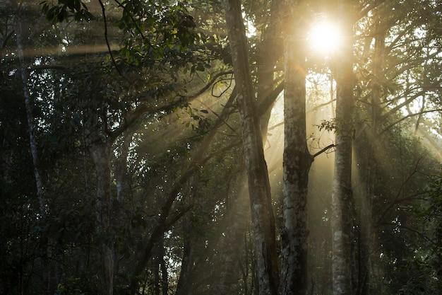 Belos raios de sol brilhando através das árvores de manhã