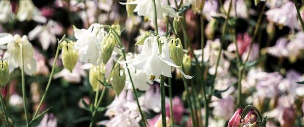 Belos sinos delicados, flores de verão em um dia ensolarado. bandeira.