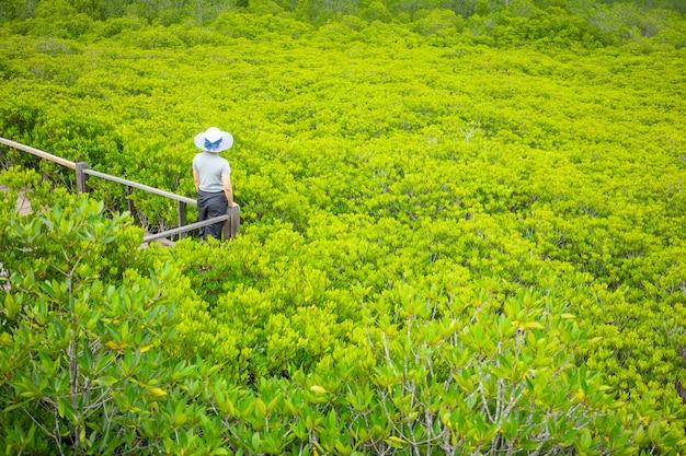 Belos turistas jovens estão admirando a floresta de mangue (ceriops decandra)