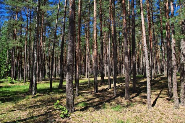 Belovezhskaya pushcha no país bielorrússia