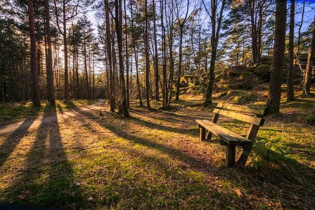 Bench em uma madeira de pinho, árvores que jogam sombras na luz solar da noite em furulunden, mandal, noruega.