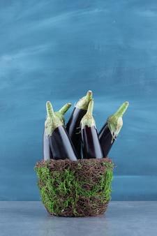 Berinjelas frescas maduras em vaso de jardim.